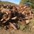 CALIFORNIA TREE SERVICE & FIREWOOD, LLC