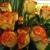 Matles Florist