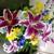 Aztec Floral Design & Gifts