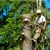 TDR Tree Services