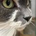 Cat Welfare Assn Inc The