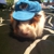 Guinea Pig/Small Pet Hideaway Hotel