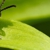 Pioneer Services Pest Control LLC