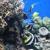 Aquatic Zoo Tropical Fish
