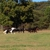 New Hope Stables & Campgrounds