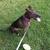 Lehigh Valley Pet Care - CLOSED