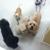 C D M Dog Grooming