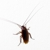 Harpoon Pest Solutions