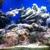 Tallahassee Aquarium Maintenance