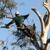 Above & Beyond Tree Service Inc