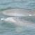 Indian River Lagoon Wildlife Tours