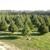 Littleworth Tree Farm