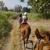 Prado Equestrian Center