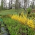 Ozark Gardens & Nursery Inc