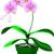 Green Nature Interiorscape Inc.