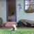 Casa de Canine, LLC
