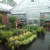 Treeland Garden Center