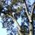 Little Tree Service