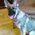 East Coast Academy of Dog Training Inc.