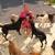 Bubbles & Bows Tropical Pet Resort & Spa