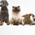 Pampered Pets Of Paducah Inc