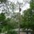 Kimball Tree Trimming Service