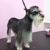 Puppylicious Pet Grooming Salon