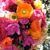 Church Street Flowers