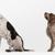 Paw Prints Animal Hospital