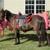 Sunny Brooke Farm and Pony Ranch