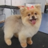 Miami Doggy Style, Pet Grooming Salon and Day Care - CLOSED