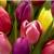 Katy Flowers