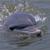 Dolphin Tours-Jekyll Island