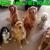 Angel Pets of Houston