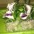 Buckhead Wrights Florist