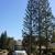 Ski's Tree Service