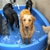 Top Dog Daycare and Boarding