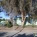 Greenwaste of Palo Alto