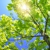 Minnesota Tree Experts