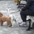Columbia Pet Sitters