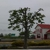 4 Leaf Leverage Tree