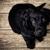 Bradley Mcminn Pet Emergency Clinic