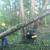 Precision Tree & Shrub Services Inc.