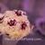 La Vie En Rose Florists