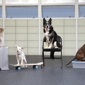 San Francisco SPCA Dog Training - San Francisco, CA