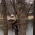 Bart's Tree Service