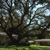 Tri State Tree Service
