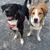 Happy Hounds Doggie Daycare & Boarding