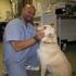 VCA Brookline Animal Hospital