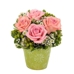 Anthurium Gardens Florists